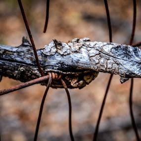 Resistance & Adversity by Jen Hamrick - Nature Up Close Trees & Bushes