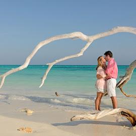 Paradise Drift Wood by Andrew Morgan - Wedding Bride & Groom ( love, kiss, zanzibar, beachwedding, wedding, destinationwedding, sea, beach, travel, paradise, africa, island )
