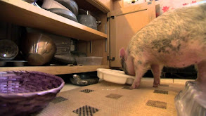 Animal BFF's: Baby Baboon and Teacup Pig thumbnail