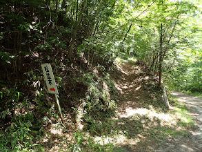 松並木へ(坂を登る)