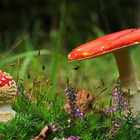 by Jiri Reisser - Nature Up Close Mushrooms & Fungi (  )