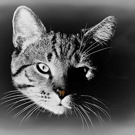 by Clark Crosser - Animals - Cats Portraits