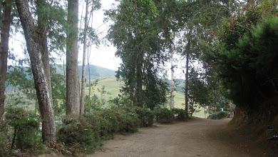 Photo: Árboles supervivientes a la tala continuada desde hace más de 4 años en la ronda de El Sacatín DSC03682.JPG