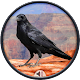 Download Crow Sounds For PC Windows and Mac