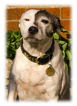 Photo: SADLY DIED SINCE THIS TAKEN LOVELY DOG