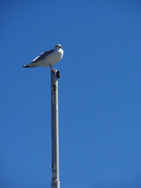 A seagull near Munising