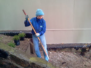 Photo: Hidden Garden Steps volunteer/organizing committee member Barbara Meli onsite (16th Avenue, between Kirkham and Lawton streets in San Francisco's Inner Sunset District) for the January 2014 monthly Steps clean-up and garden-maintenance event; she was part of a group that worked, in spite of light rain and cold weather, to make sure nearly five dozen plants donated by our San Francisco Department of Public Works colleagues were added to the gardens in progress. New and returning volunteers are welcome to join these volunteer-driven community-based efforts on the second Saturday of each month from 1- 3 pm.   For more information about the Steps, please visit our website (http://hiddengardensteps.org), view links about the project from our Scoopit! site (http://www.scoop.it/t/hidden-garden-steps), or follow our social media presence on Twitter (https://twitter.com/GardenSteps), Facebook (https://www.facebook.com/pages/Hidden-Garden-Steps/288064457924739) and many others.