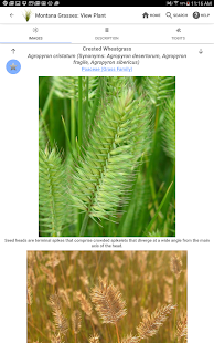 Montana Grasses- screenshot thumbnail