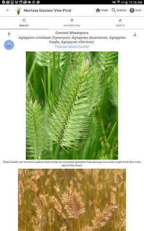 Montana Grasses Screenshot
