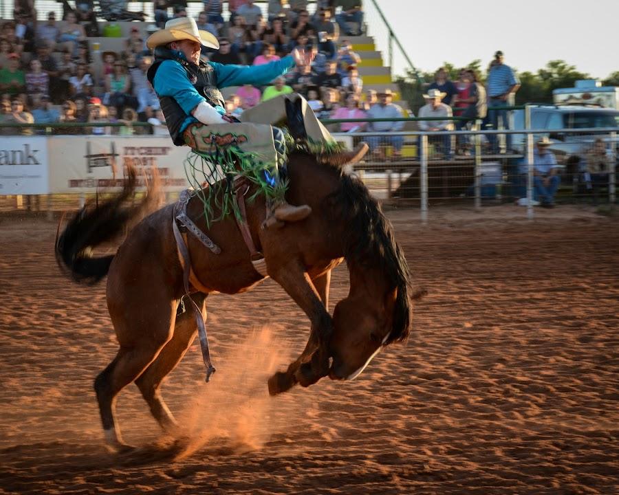 Bronc Rider Kingfisher by Eva Ryan - Sports & Fitness Rodeo/Bull Riding ( cowboy, oklahoma, horse, rodeo, bronc_riding,  )