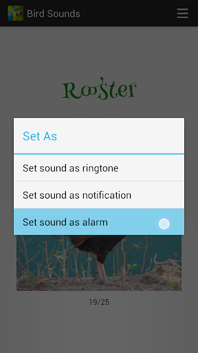 Bird Sounds screenshot 2