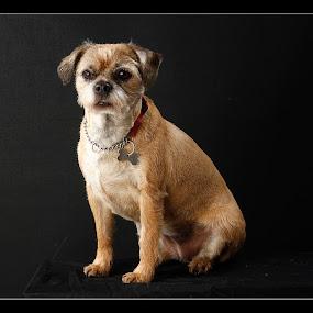 by Graham Sivills FBCS - Animals - Dogs Portraits