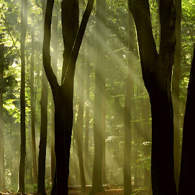 Lovely forestlane. by Gert de Vos - Landscapes Forests