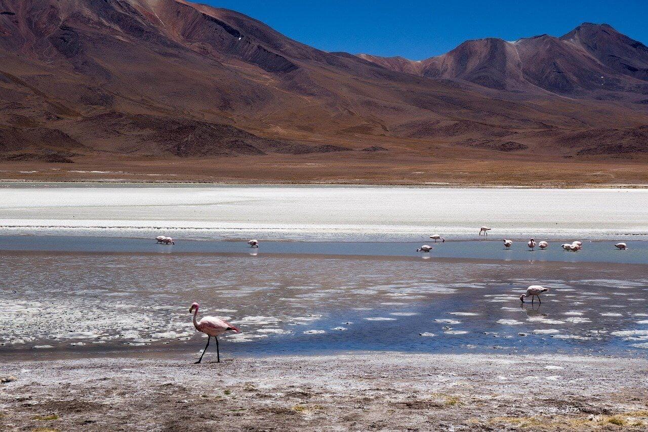 flamingoes in laguna in salar de uyuni en bolivia.jpg