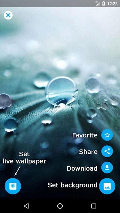 Dandelion Live Wallpaper Apk Download Apkindocoid