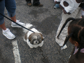 Photo: a doggy that had bunny ears on...