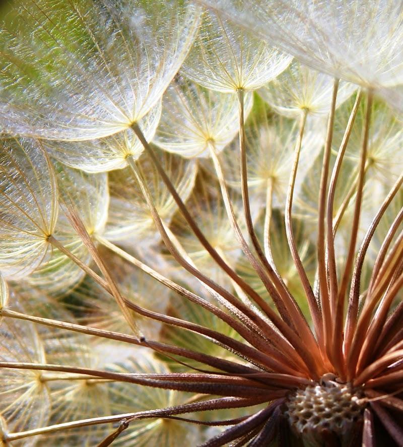 l'intimo di un fiore di Gero