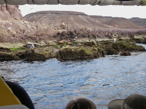 Photo: Approaching sea lion rookery for snorkeling.