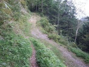 林道に合流