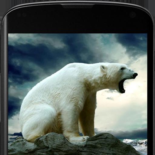 Bears Live Wallpaper 個人化 App LOGO-硬是要APP