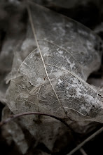 Photo: leaf remains