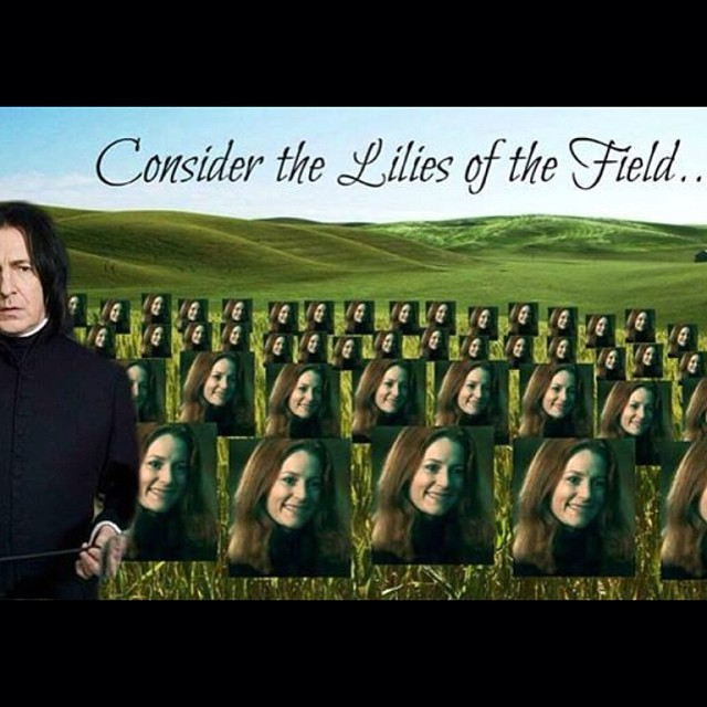 consider the lilies of the field