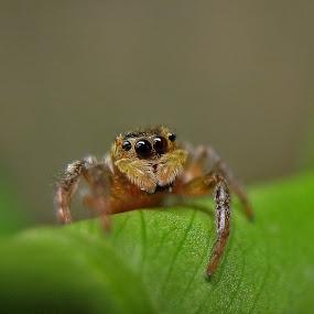 Spider eye by Bhavya Joshi - Animals Insects & Spiders
