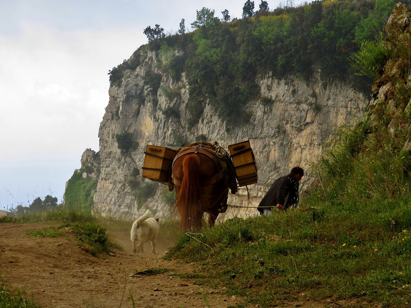 Trasporto a dorso di cavallo di Giorgio Lucca