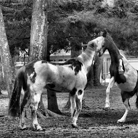 Play Time by Linda Brintzenhofe - Animals Horses