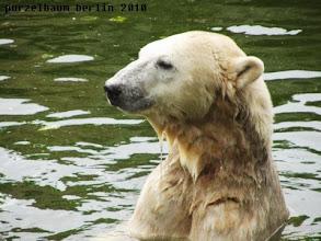Photo: Ganz aufmerksamer Knut ;-)