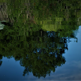 TreeLine Reflection by John Wright - Nature Up Close Water ( sky, blue sky, reflections, still life, water )