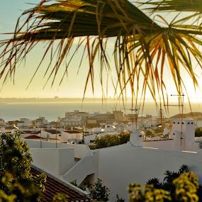 Mia Praia by Steve Weston - Landscapes Travel ( palm, view, town, sunrise, portugal )