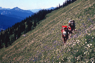 Photo: 43. Traversing meadows near High Pass. Much of the high country of the North Cascades is characterized by this picture. During flower season in July and August, one can walk for miles through oceans and oceans of these flowers.
