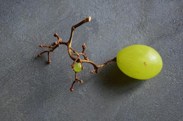 uva di Tiz