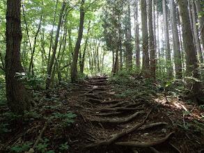 木の根の階段を登る