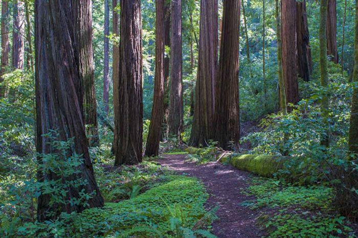 Big Sur State Park California