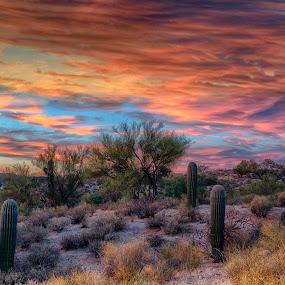 Saguaro Trio by Charlie Alolkoy - Landscapes Deserts ( desert, sunset, arizona, tucson, sunrise, cactus )
