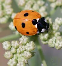 Photo: Ladybird