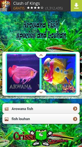 Arowana fish Species And Lohan