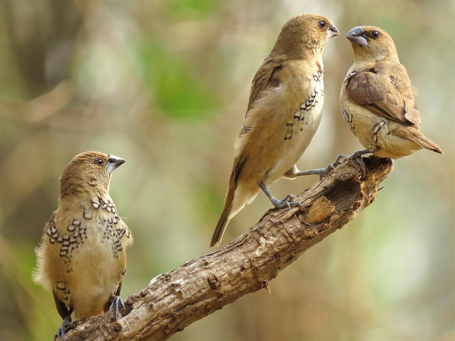 by Sanjay Nagaonkar - Animals Birds