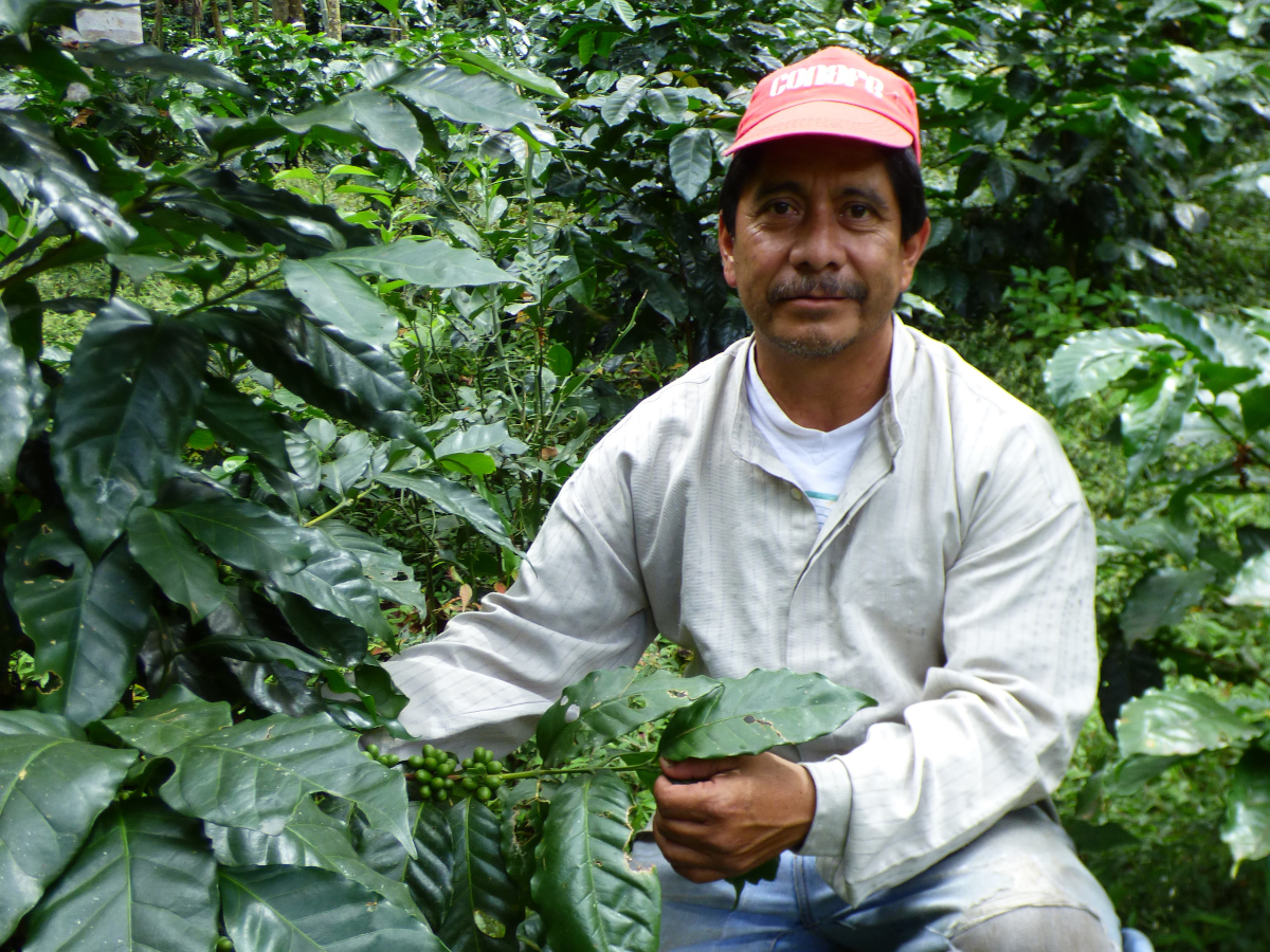 Coffee producer prosperity and success for smallholders in Mexico -  Solidaridad Network