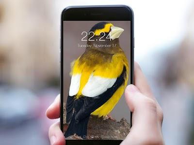 Birds Wallpaper HD Lockscreen screenshot 1