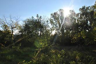 Photo: 18.10.2015. Le Sentier Nature sous le soleil couchant.