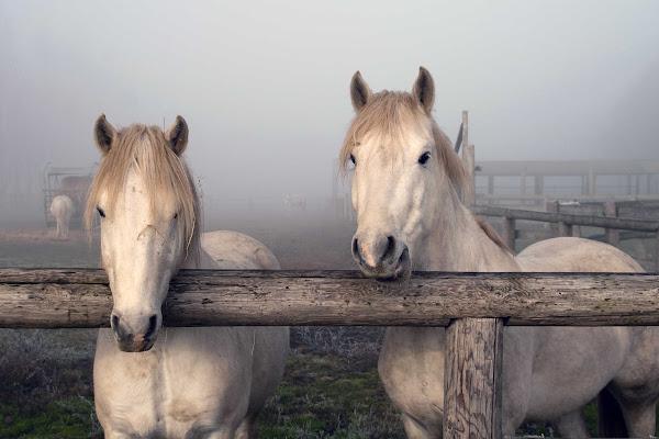 Cavalli nel Delta di Fotodiale
