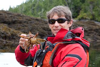 Photo: Kelp crabs are fairly common