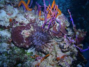 Photo: Sea Anemone