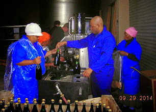 Photo: Bottling champagne at a vineyard.
