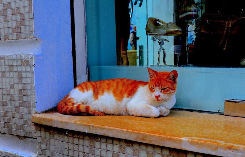 Arancino, un gatto sul gradino di Nickthepic