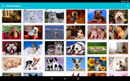 玩娛樂App 狗的照片!免費 APP試玩