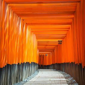 Fushimi Inari Shrine by Paul Atkinson - Landscapes Travel ( religion, orange, structure, shrine, inari, japan, torii, kyoto, shinto, fushimi, gate,  )